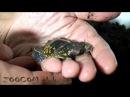 Невероятные лягушки: ставим новые рекорды!