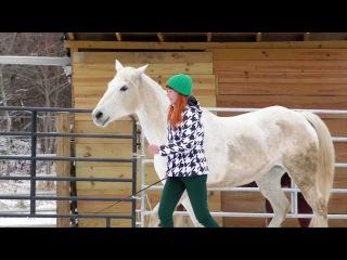 Хентейви, Дрессура на свободе - Игра с лошадью