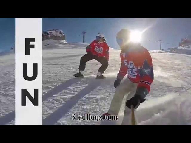 Sled Dogs Snowskates - New sport on the slopes!