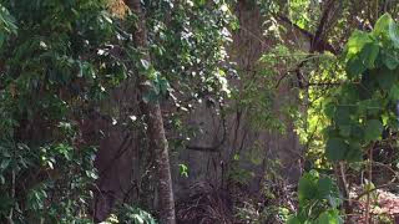 Gaiola: Caçador de Coleiros no Lote Vizinho. Tiguera 360, Brasil. IMG_5892. 30,6 MB. 10h07. 14nov17