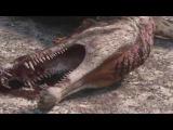 Spinosaurus vs Carcharodontosaurus The balance of power Planet Dinosaur