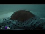 Песочный человек (2017) HD