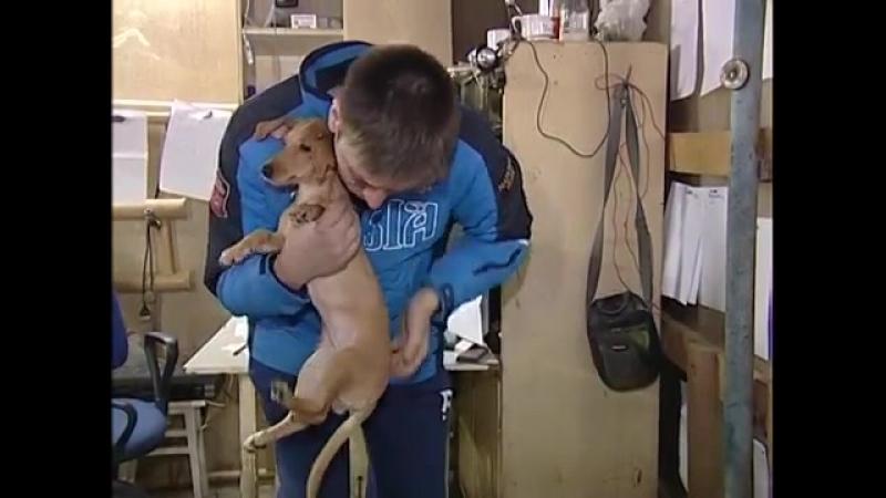 Смоленские журналисты попытались встретиться с хозяйкой, выбросившей собаку из окна 5-го этажа (2016г.)