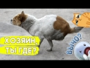 Эта собачка потеряла задние лапки, но её спасли добрые люди!