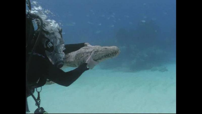 Прогулки с морскими чудовищами: Эпизод 1 (BBC)