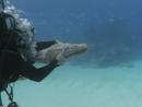 Прогулки с морскими чудовищами Эпизод 1 BBC