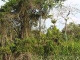 Дождливые леса АМАЗОНКИ музыка бразильская этническая