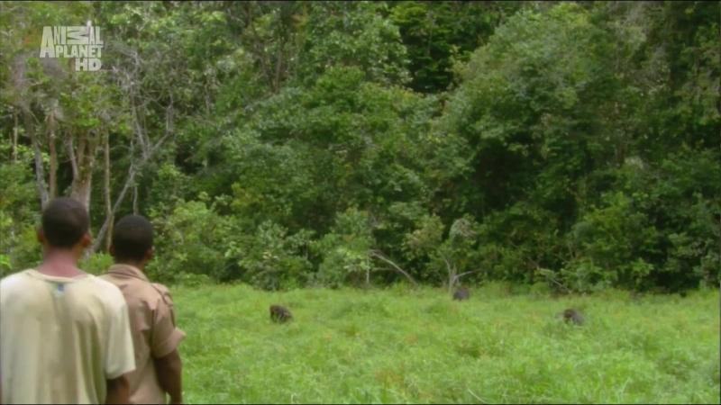 В дебрях Африки (2010)