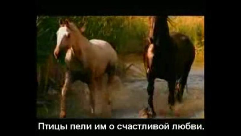 Красивая грустная история о лошадиной любви
