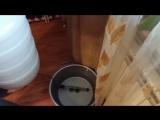 Самогон из пшеницы. Видео 1 - Ставим брагу, 1 заброд
