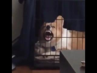 Злобный смех (6 sec)