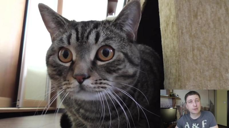 У кошки понос, что делать Основные причины поноса у кошки