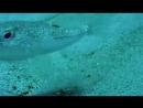 Это разборки подводные