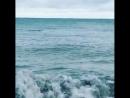 Дельфины в Сочи плещутся у самого берега. 15.01.18