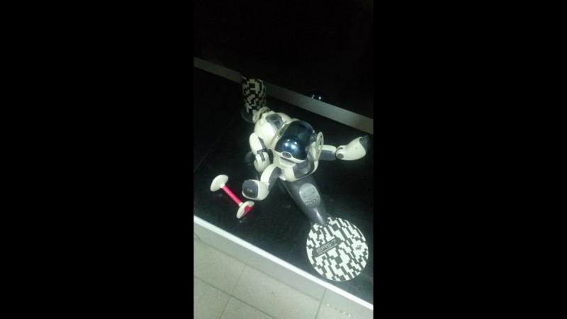 Собака-робот AIBO радуется новому посетителю нашего салона