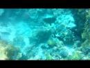 Удивительный подводный мир Красного моря
