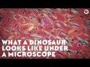What a Dinosaur Looks Like Under a Microscope