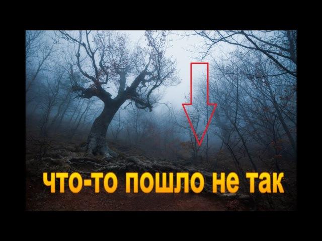 Кто рано встает, тот кучу монет найдет! Кладоискатели - Украина! (Коп - 2017).