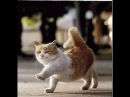 Прикольные и смешные коты и кошки ЧАСТЬ 2/ FUNNY CATS PART 2