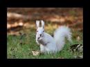 森の妖精 白いエゾリス white Squirre 2017年10月