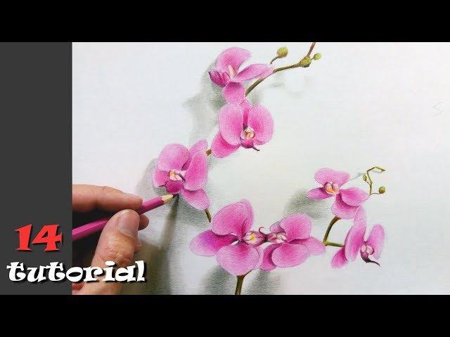 Как нарисовать цветы карандашом ПОЭТАПНО Учимся рисовать цветными карандашами