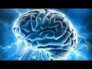 Сенсационное открытие палеонтологов Уникальные свойства мозга Штурм сознания