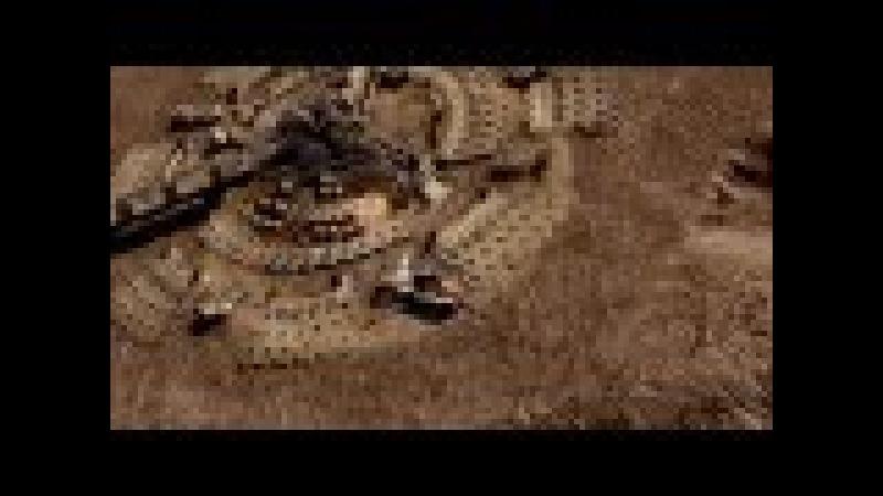 Albert Sipov - Sunrise on Caprica (Battlestar Galactica Music Video)