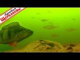 ПЛОТВА НА СТЕРОИДАХ, ОКУНЬ-КАЧОК и РАКИ-РАЗБОЙНИКИ. Подводные съёмки. Зимняя рыбалка (Щербаковы)