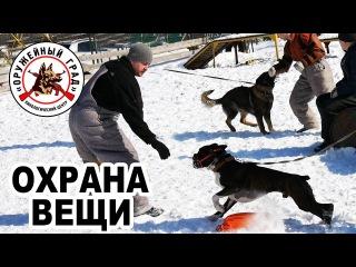 Дрессировка собак по охране вещи