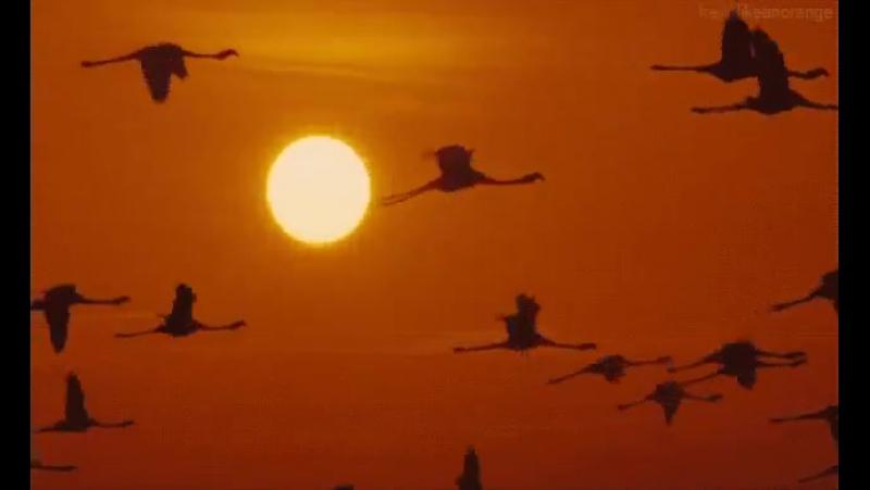 Летят перелётные птицы...