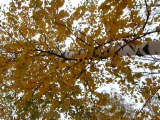 Осень, осень... у листьев спросим...