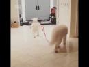 Медвежонок выгуливает собачку