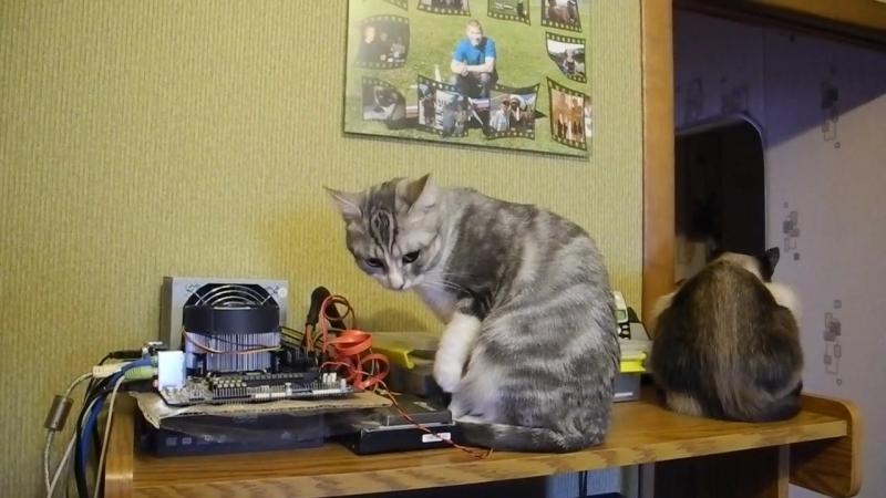 Коты-компьютерщики