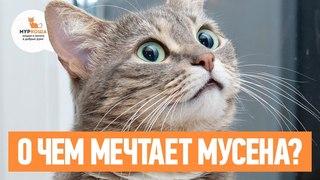 Кошка Мусёна очень хочет встретить друзей (частный приют