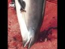 В Чёрном море браконьеры отловили 46 дельфинов и 5 акул