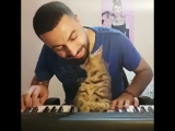 Кот с милой мордой слушает, как хозяин играет на синтезаторе