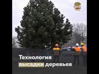 Технология высадки деревьев