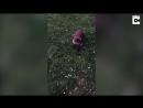 Собака порезвилась в парке в компании дикой лисы