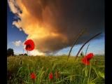 ВИА_Цветы_Красные_маки