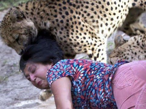 Cái Kết Đắng Khi Đùa Giỡn Với Động vật nguy hiểm nhất -ANIMALS ATTACK PEOPLE VIDEOS COMPILATIONS