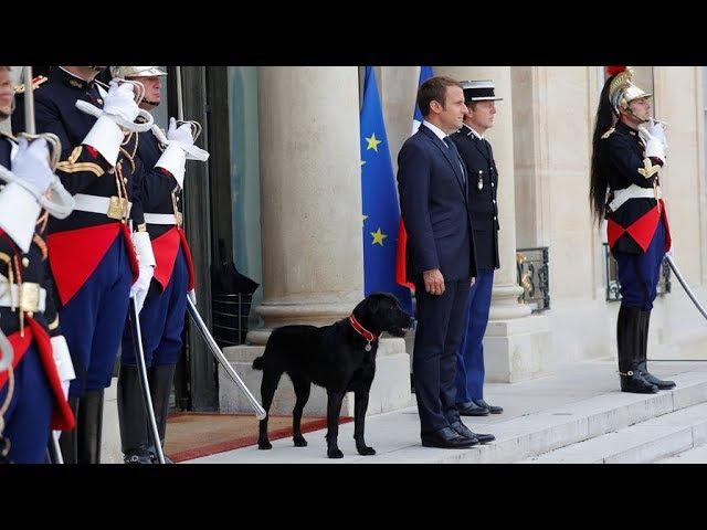 Собака президента Франции Макрона писает в камин дворца
