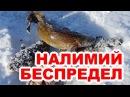 Ловля крупного налима на Байкале подводное видео