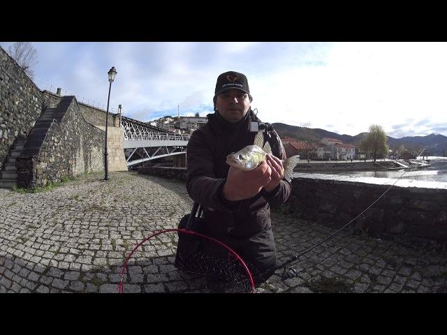 Pesca aos Luciopercas - Fishing to Zander / Walleye