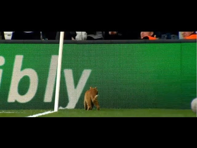 Cat interrupts Champions League Game [Bayern vs. Besiktas 2018]