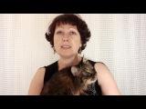 Как отучить кота мстить и гадить. ЛЕГКО и НЕОЖИДАННО.