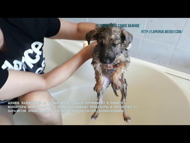 Групповое купание щенков из приюта вместе с волонтером в его квартире   bath puppies in ...