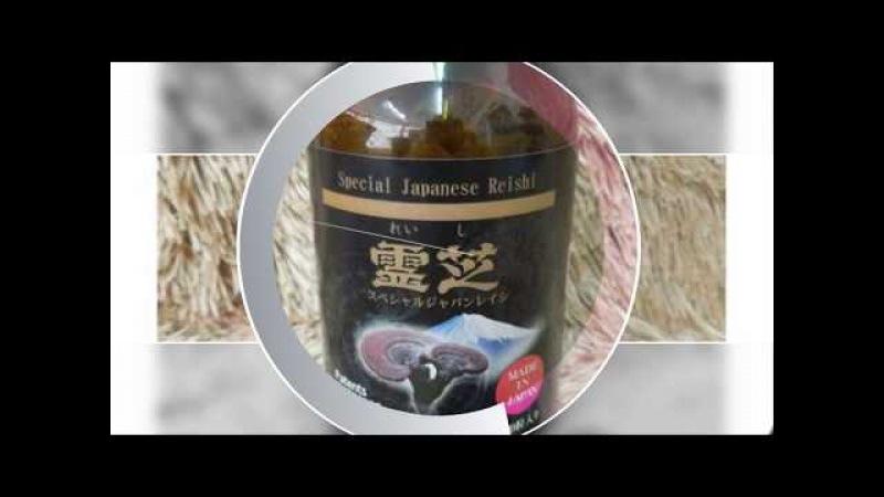 Nấm linh chi sừng hươu giá sỉ - Hàng nôi địa Nhật Bản