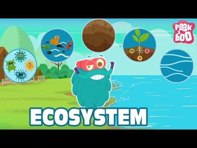 ECOSYSTEM The Dr. Binocs Show Best Learning Videos For Kids Peekaboo Kidz
