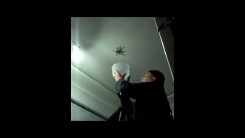 Нашествие пауков Подборка
