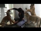 Йована Вентура | Мои милые кошки)))